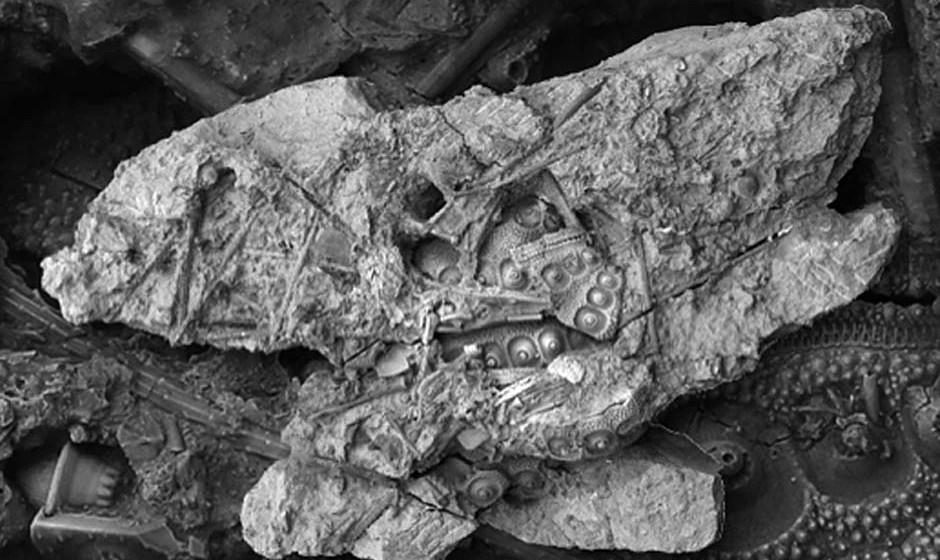 Eluveities 'eigenes' Fossil