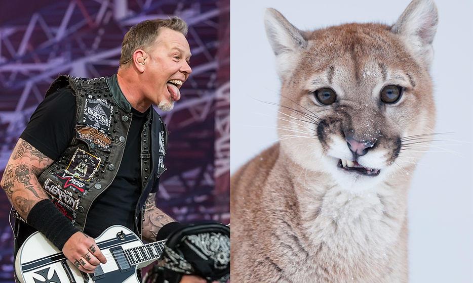 Metallica vs.Puma