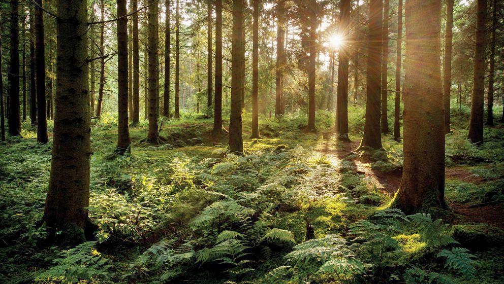 Die Wacken-Macher setzen sich für den heimischen Wald ein