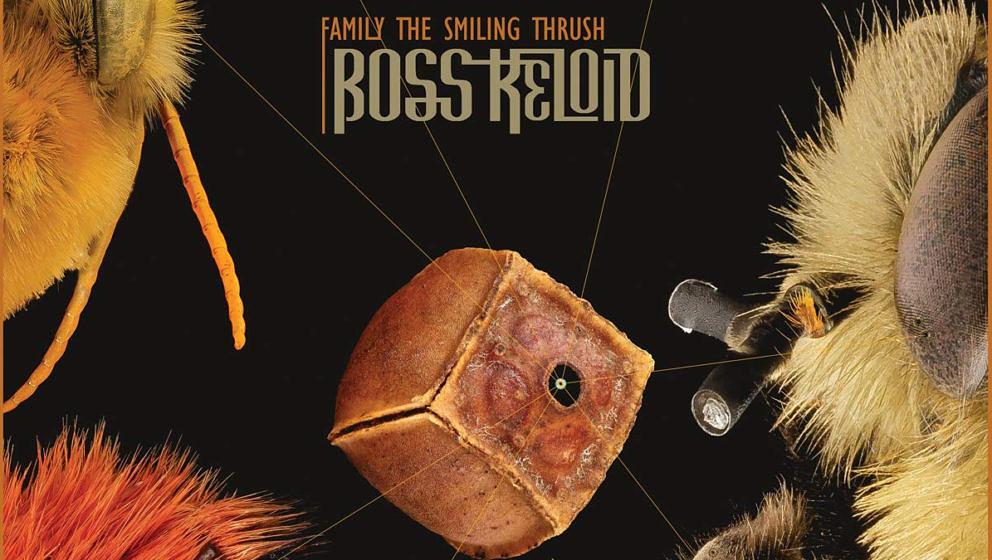 Boss Keloid FAMILY THE SMILING THRUSH